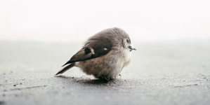 Silver Sparrow: Why Macs Need Endpoint Protection